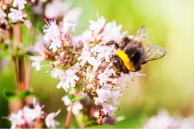 Świętujemy Światowy Dzień Pszczoły